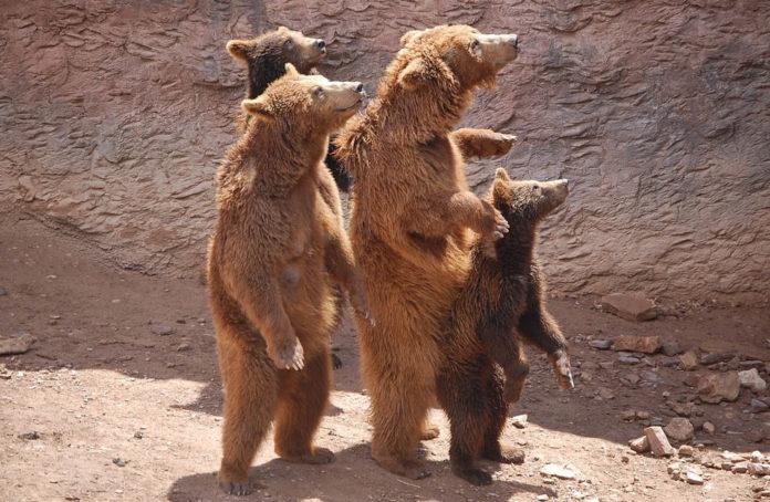 negazionisti orso natura