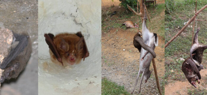 pandemia animali pericolo