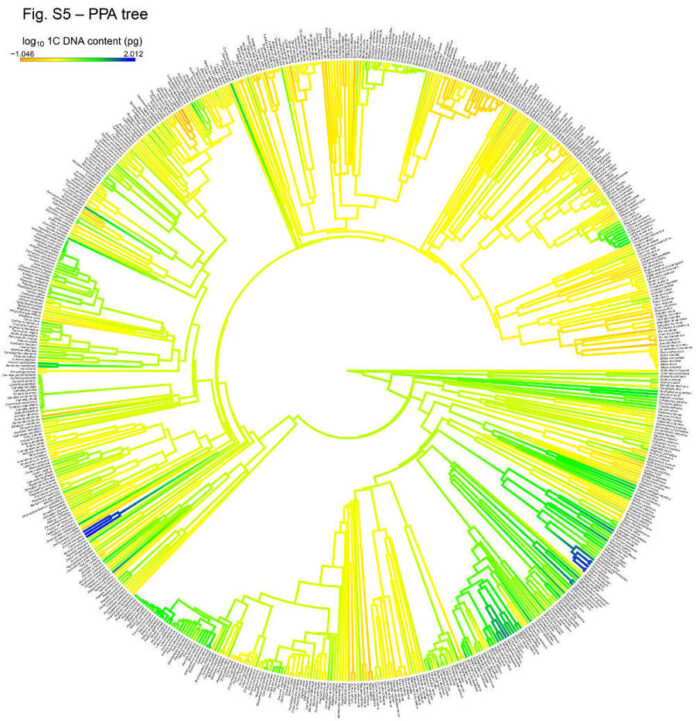 evoluzione genoma piante