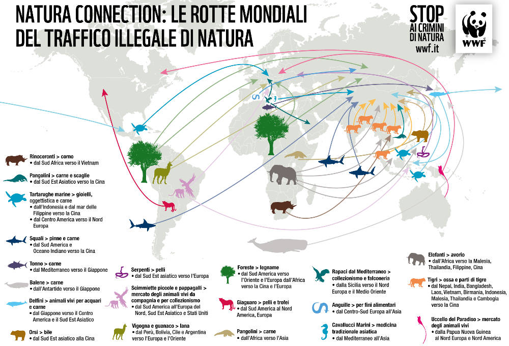 Infografica mappa commercio illegale