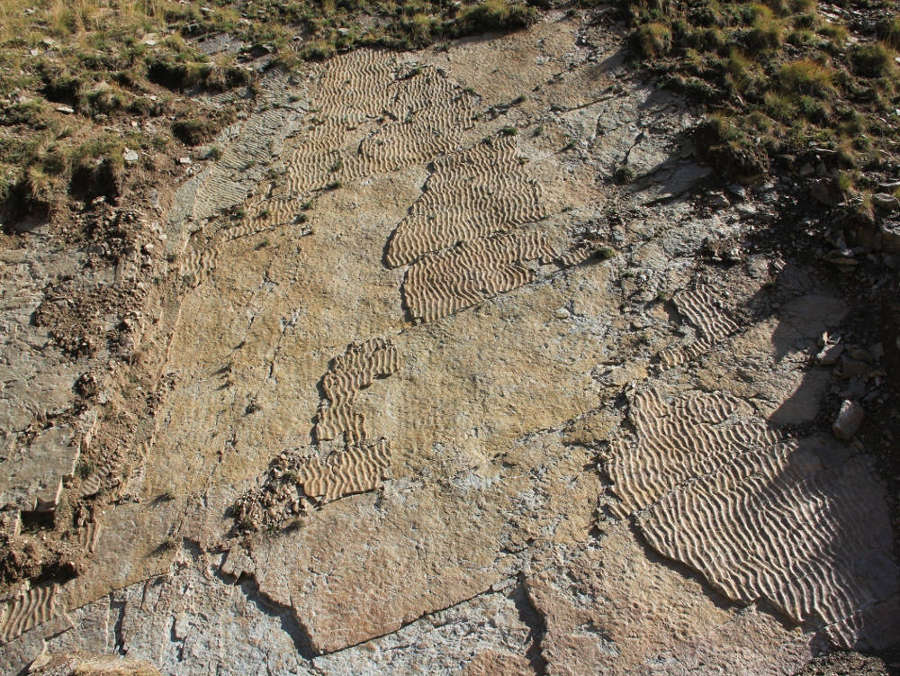 Impronte ripple marks tracce