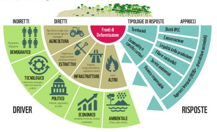 deforestazione fonti