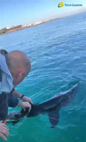Salvataggio dello squalo elefante brindisi