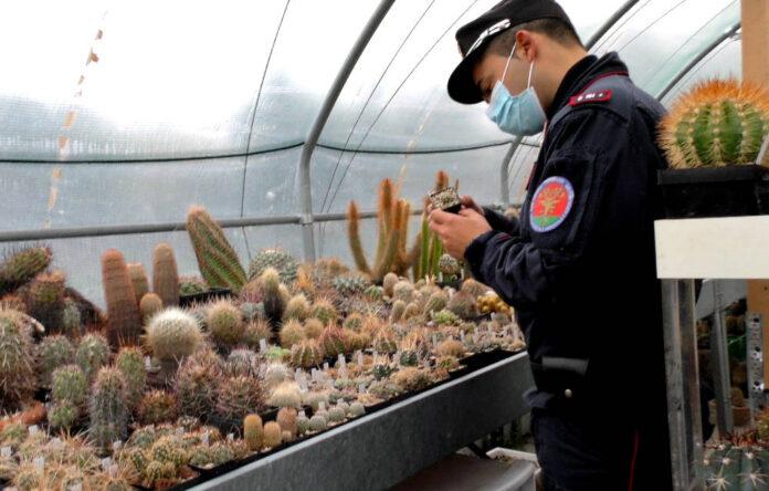 controllo serra carabinieri forestali ancona