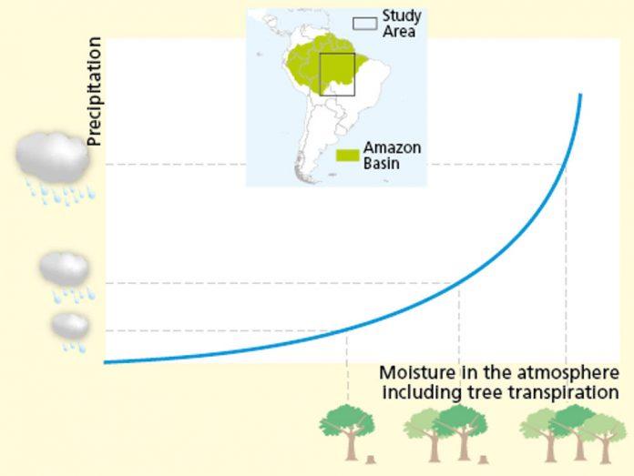 piovosità amazzonia